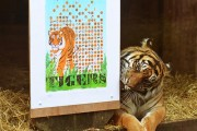 ZSL-London-Zoo---Sumatran-Tiger-Print1