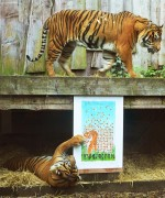 ZSL-London-Zoo---Sumatran-Tiger-Print4